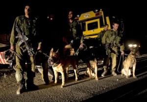 Hebron: militari israeliani scatenano cani contro un palestinese, poi lo arrestano