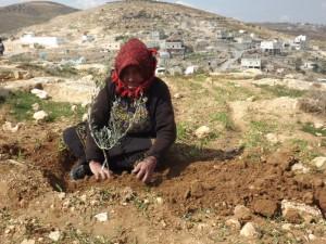Arresti e azioni di resistenza nonviolenta nelle colline a sud di Hebron