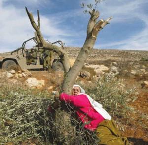 Rapporto Olp: 'Oltre mille ettari di terra confiscata e 4 palestinesi assassinati a gennaio'