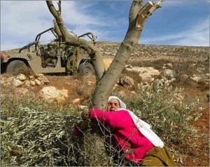 Dichiarazioni palestinesi nella 36° Giornata della Terra
