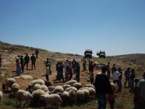 Cinque pastori arrestati a Hebron: la testimonianza di Operation Dove