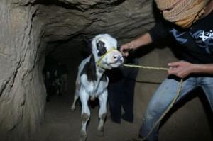 Smuggle-tunnels-are-lifeline-under-Egypt-and-Gaza-border_1