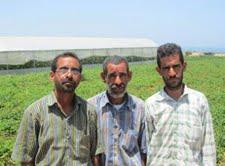 Vite sotto occupazione: agricoltura senza mercato