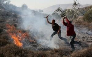 Coloni israeliani incendiano uliveti palestinesi a Nabi Saleh