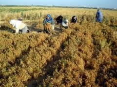 Dopo 12 anni di separazione forzata, gli agricoltori palestinesi ritornano a coltivare i propri terreni