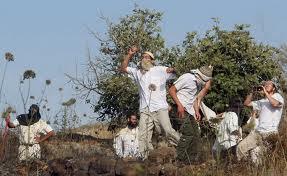 Coloni vandalizzano reti d'acqua e d'energia a Nablus