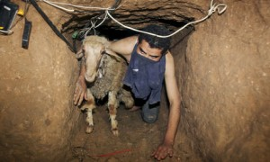 gaza-sheep-smuggling