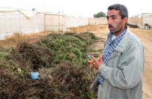 """Storie da Gaza: """"Non mi resta che bruciarle"""""""