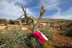 ONU: continua a peggiorare l'economia palestinese colpita dalla crisi