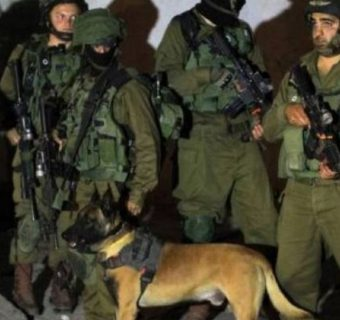 Hebron-niight-soldiers-dog-e1472539662406 (1)