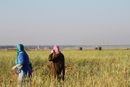 I soldati israeliani sparano a contadini gazawi