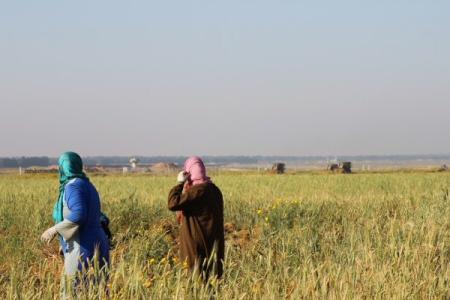 Soldati israeliani sparano a contadini della Striscia di Gaza