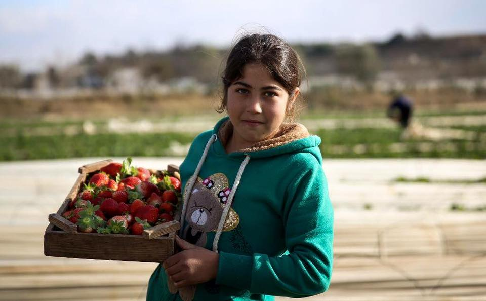 Fragole made in Palestine