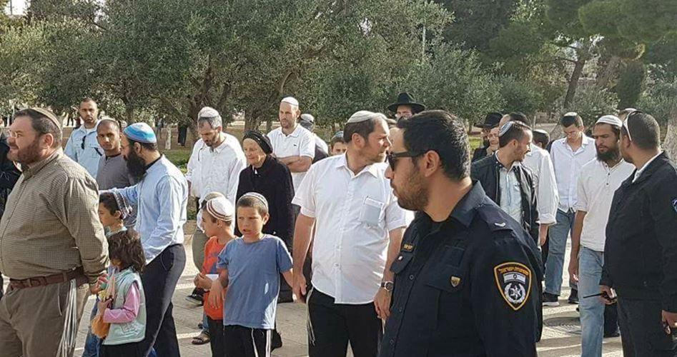 Domenica, 517 coloni hanno sfilato nei cortili di al-Aqsa