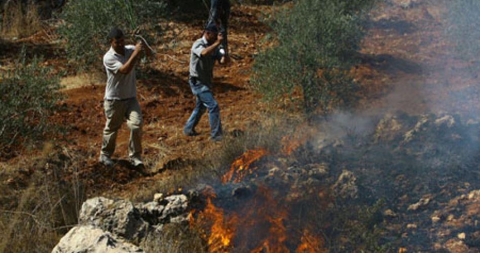 Coloni danno fuoco a uliveti e campi agricoli palestinesi