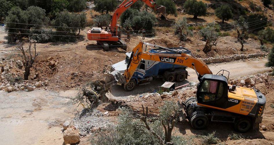 Le autorità israeliane sradicano decine di ulivi a est di Tubas