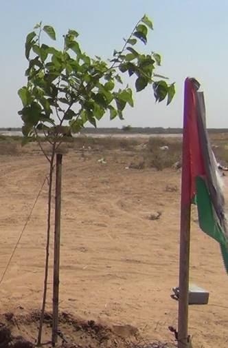 Vivere sotto assedio: l'uccisione indiscriminata dei contadini palestinesi