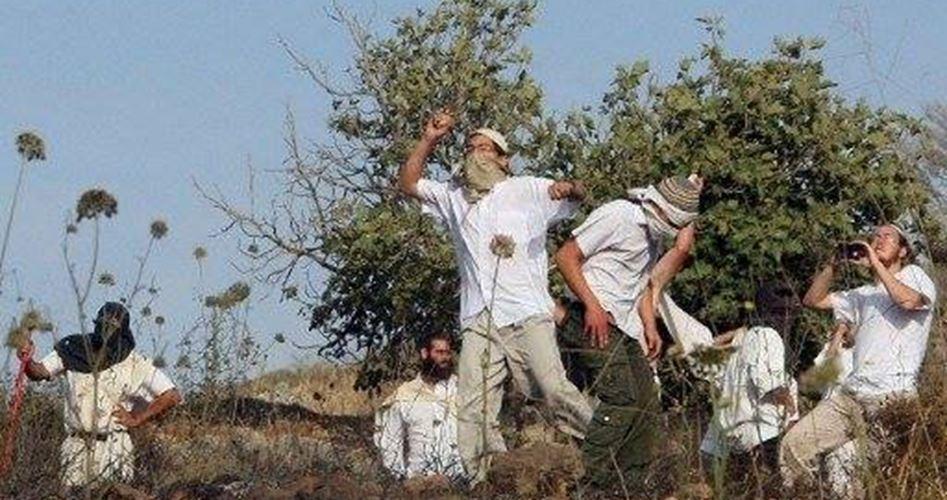 Bande di coloni attaccano Umm al-Khair