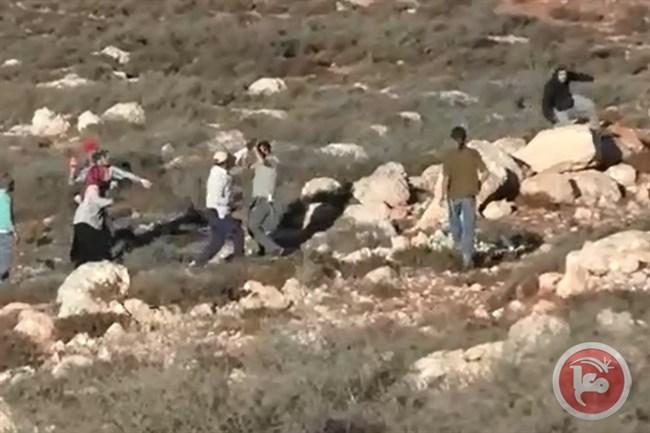 Video: attacco di coloni israeliani contro coltivatori di olive palestinesi vicino Nablus