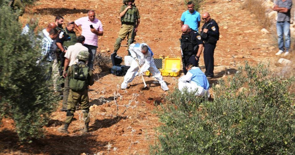 La raccolta delle olive, attività in un ambiente ostile