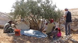 Hebron, le forze di occupazione rapiscono 10 agricoltori, compreso un adolescente