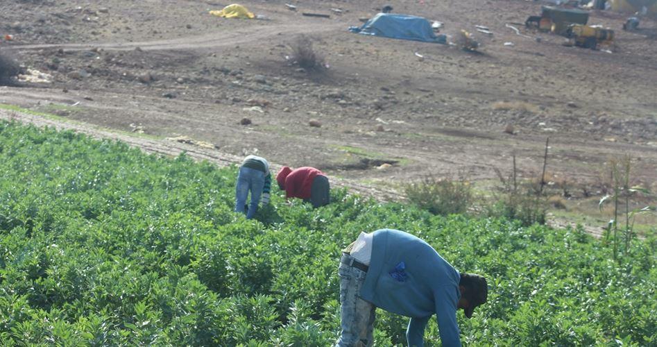 La città di Furush Beit Dajan in pericolo di cancellazione