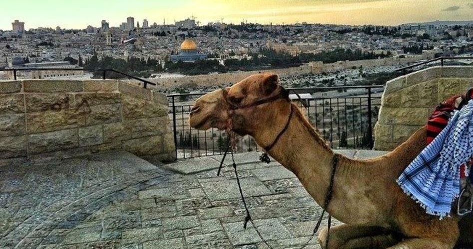 Gerusalemme capitale del turismo arabo per il 2018: conferma l'identità della Città Santa
