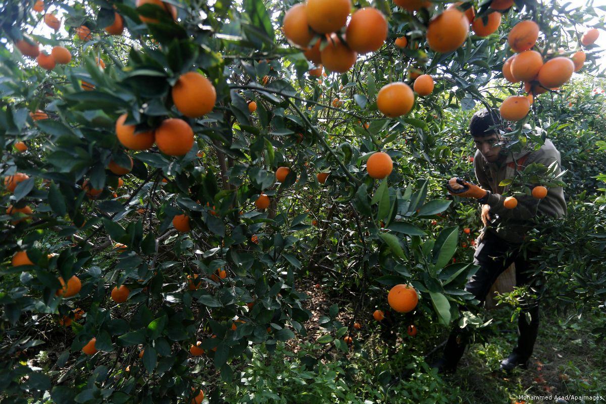 Gaza ferma importazione di frutta da Israele