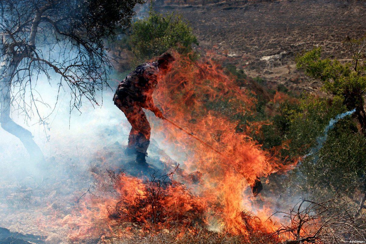 Coloni danno fuoco a decine di ulivi nella Cisgiordania occupata