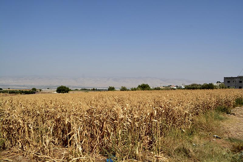 L'acqua come arma: i villaggi agricoli della Valle del Giordano minacciati nella loro esistenza.