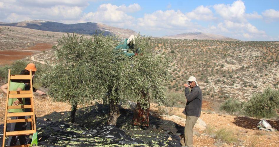 IOF vietano a palestinese di entrare nella sua fattoria vicino a Tubas