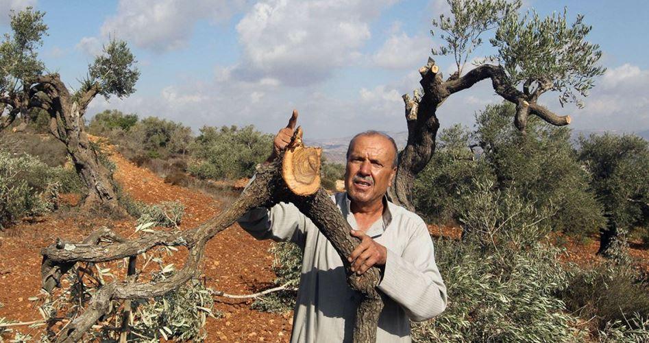 Soldati sradicano ulivi e spianano terreni a Hebron