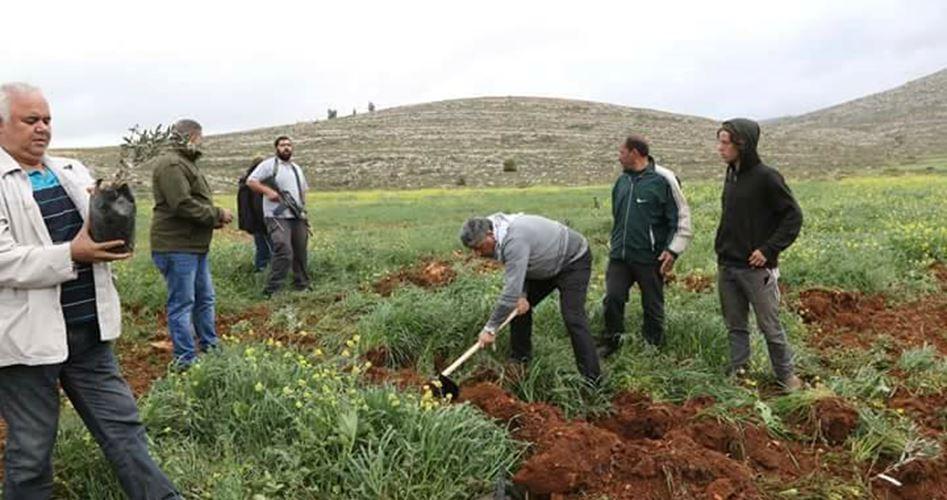 Soldati israeliani minacciano di sradicare ulivi nella Valle del Giordano