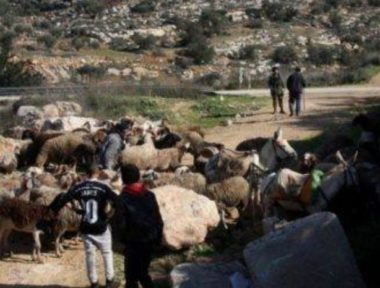 Esercito arresta pastori palestinesi in Cisgiordania