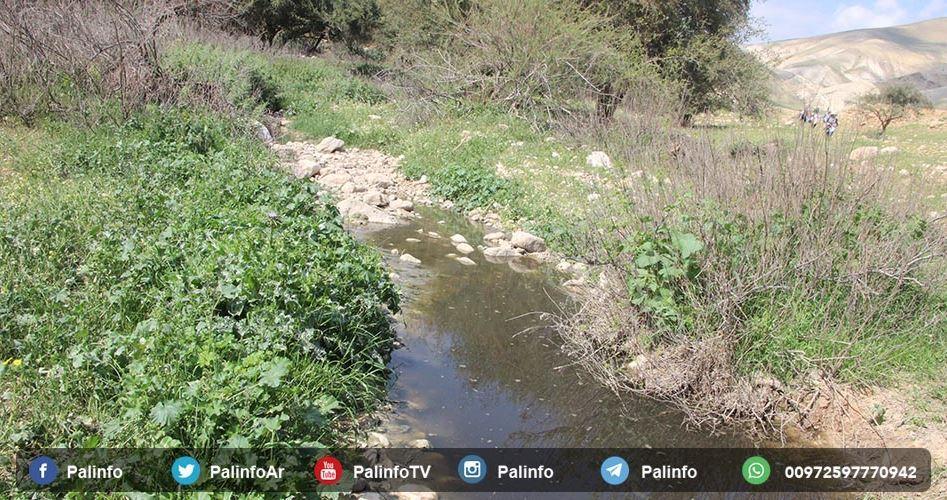 Contadini di Salfit: coloni scaricano acque reflue sui nostri campi