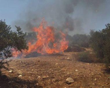 Orda di coloni brucia terreni agricoli a Nablus