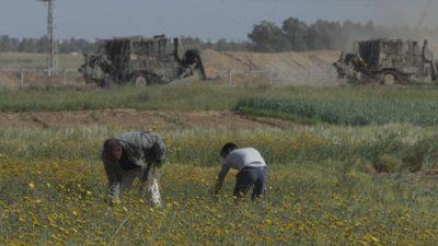 Rapporto: i pesticidi israeliani contaminano le coltivazioni di Gaza