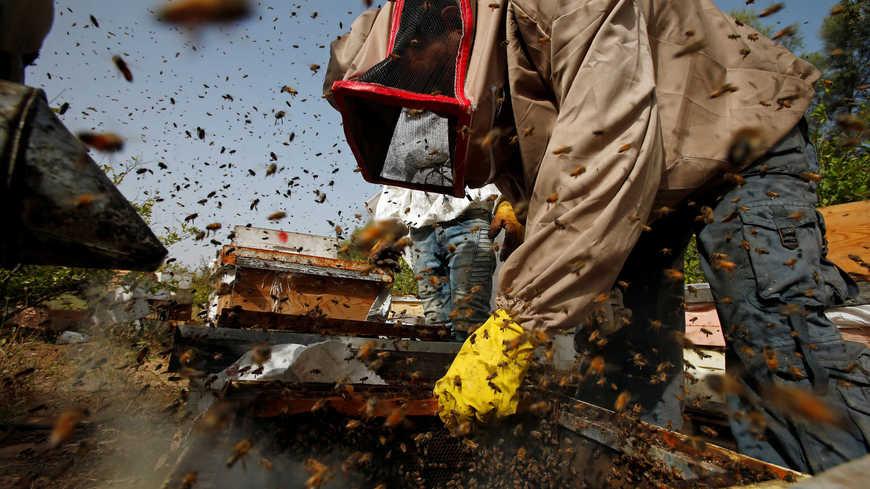 Perché i palestinesi investono in zaatar e miele