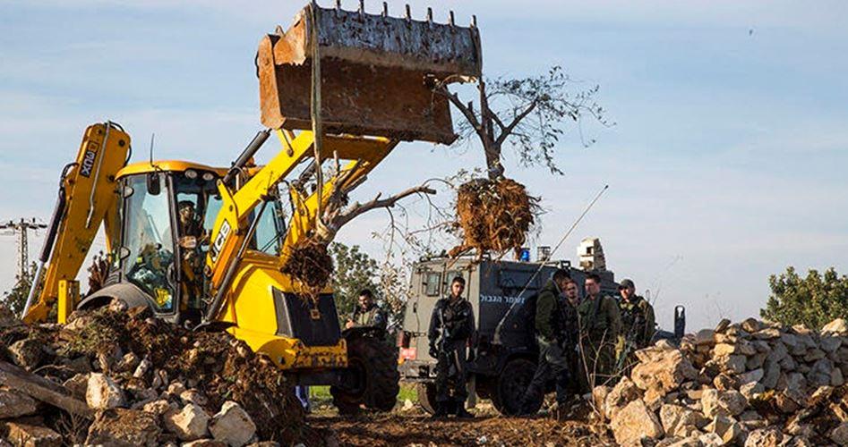 IOF sradicano 300 ulivi e distruggono pozzi d'acqua vicino Tubas