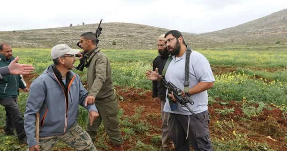 Coloni rubano raccolta di olive a Nablus