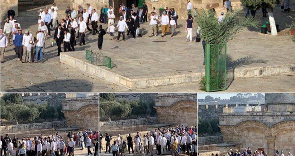 Gerusalemme, 754 coloni hanno invaso al-Aqsa