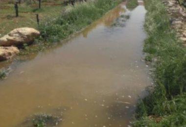 Coloni israeliani allagano un oliveto con acque di scarico