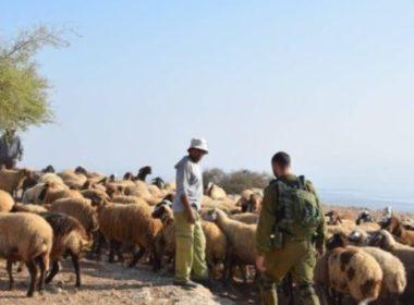 Soldati israeliani inseguono pastori nella Valle del Giordano