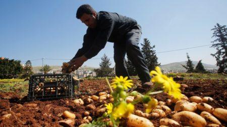 Israele interrompe commercio agricolo con ANP