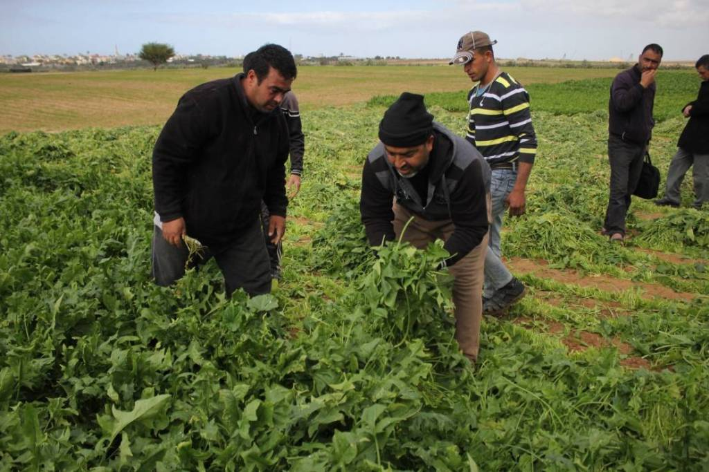 Ministero dell'Agricoltura dichiara Gaza orientale area disastrata: Israele l'ha contaminata con prodotti chimici