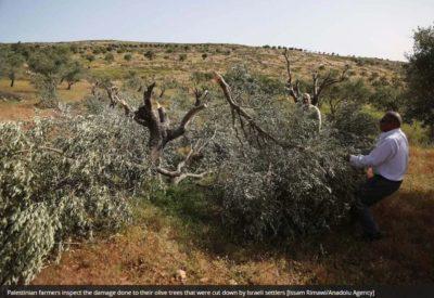 Rapporto: coloni israeliani vandalizzano 1600 alberi palestinesi nel 2020