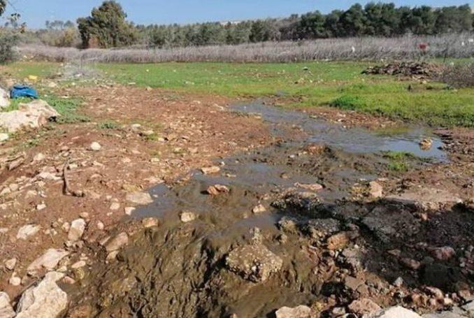 Coloni inondano di acque reflue le terre agricole vicino Hebron