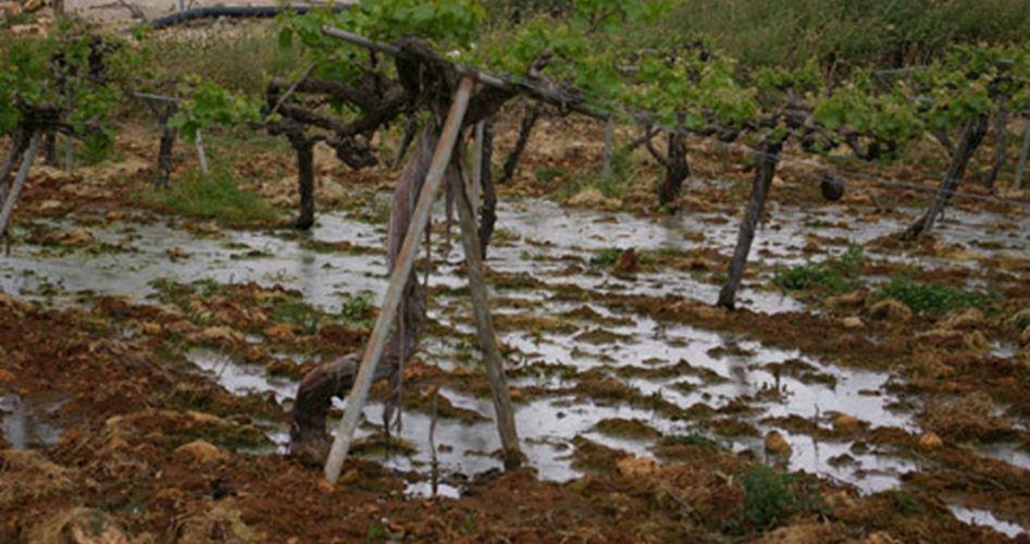 Coloni inondano vigneti di Beit Ummar con acque reflue