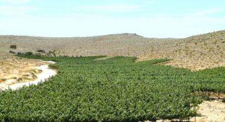 """Negev, """"Il deserto trasformato in orto"""" che ha causato la crisi idrica: l'origine del greenwashing israeliano"""