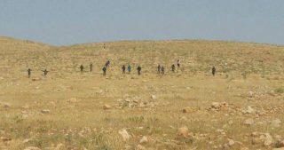 Coloni invadono terreni agricoli e aggrediscono pastori palestinesi